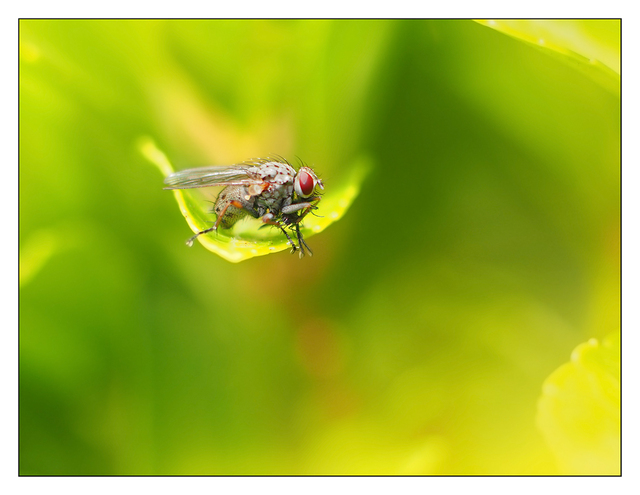 Fly in Greens Close-Up Photography