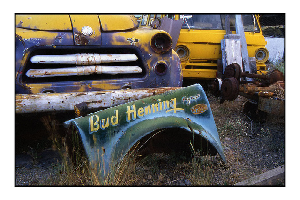 Bud - 35mm photos