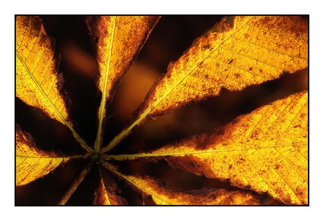 Chestnut leaf 35mm photos