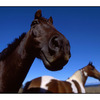 Funny Horse - 35mm photos