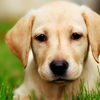 glucosamine for dogs - Picture Box
