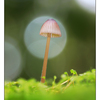 Mushroom in Moss - Close-Up Photography