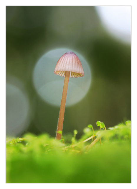 Mushroom in Moss Close-Up Photography