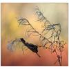 Caught Autumn Leaf 02 - Close-Up Photography