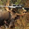 moose 2014 3 - Picture Box