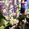 floral design - Simply Elegant