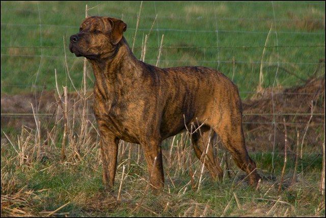 62 honden 28 dec