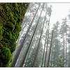 Lerwick Park Fog3 2015 - Nature Images