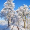 sneeuw1 - balingehofforum