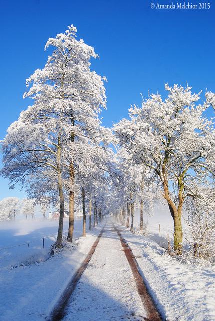 sneeuw1 balingehofforum