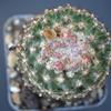 DSC 0041 - Cactus