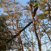 Edgewater Maryland tree rem... - A-Fordable Tree Service