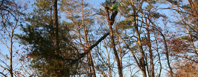 Edgewater Maryland tree removal A-Fordable Tree Service