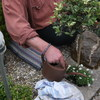Cindy's grafje beplanten 11... - R.I.P