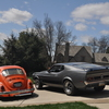 mustang and the beetle