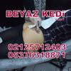 dövme salonları - Dövme Salonu Bakırköy Tatto...