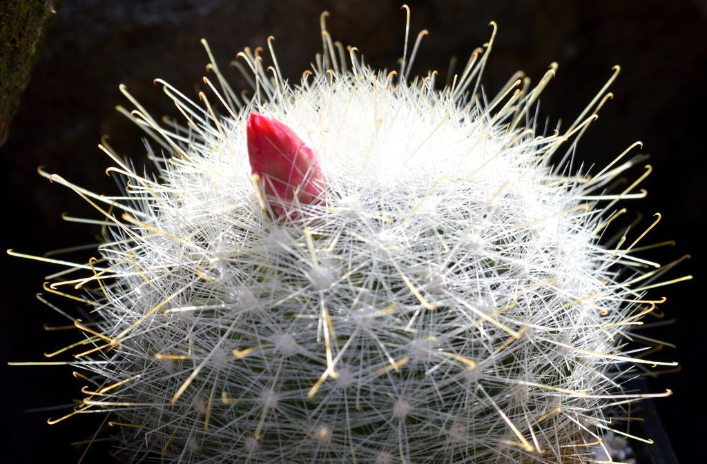 DSC 0062 - Cactussen2015