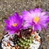 P1070946 - Cactussen2015