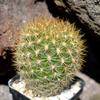 DSC 0273 - Cactussen2015