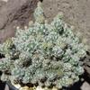 DSC 0271 - Cactussen2015