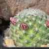 DSC 0266 - Cactussen2015