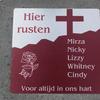 Cindy's grafje met nieuwe n... - R.I.P