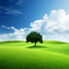 arborist durham nc - Hamm's Tree Service