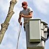 Hamm's Tree Service