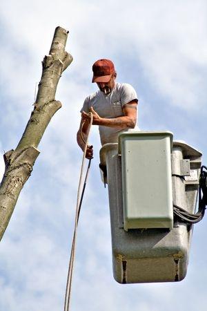 tree service durham nc Hamm's Tree Service