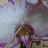 orchidee stap1 - cactus
