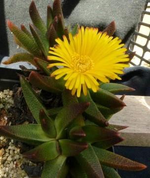 P1010479 (2) - cactus