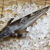 fish-19560 640 - Picture Box