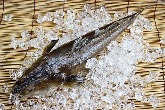 fish-19560 640 Picture Box