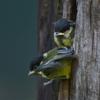 30 - birdies