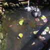 Tuin - Vijverwater ververse... - In de tuin 2015