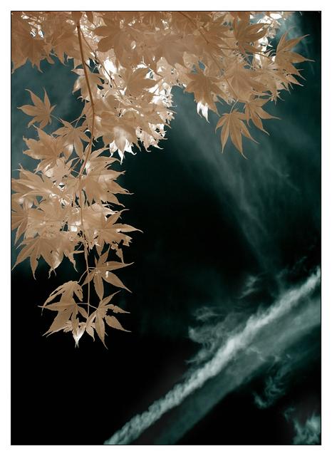 Infrared backyard 2015 01 Infrared photography