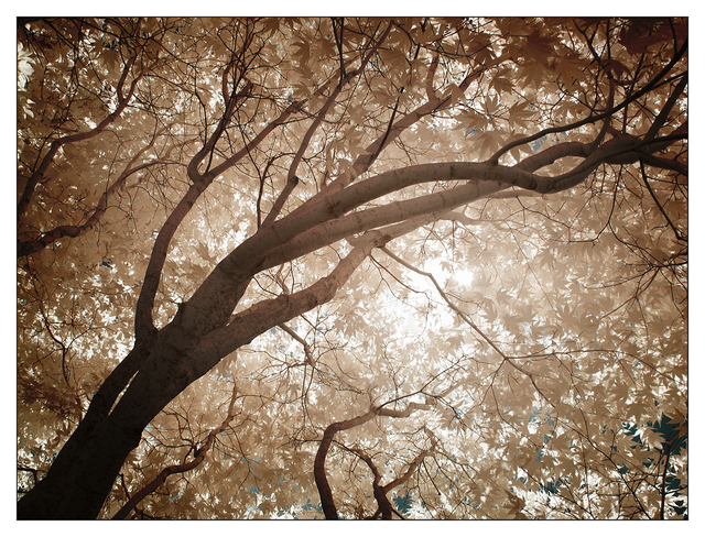 Infrared backyard 2015 02 Infrared photography