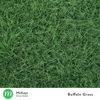 lawn seed - Mckays Online