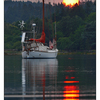 ForestFire Sundown 03 - Comox Valley
