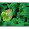 leafy floor - 35mm photos