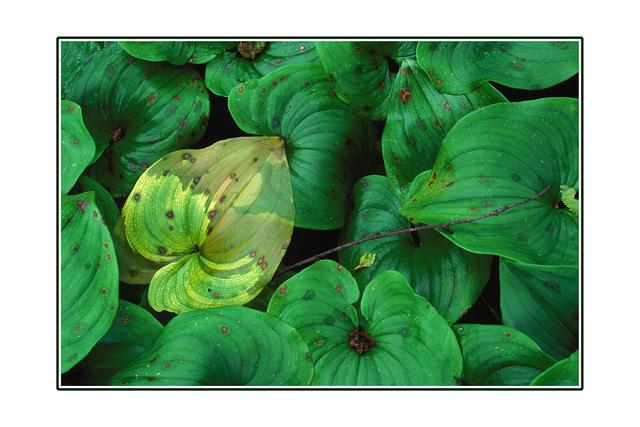 leafy floor 35mm photos