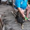 Dolly 12-08-15 08 - In de tuin 2015