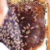 Bee Removal San Diego - Bee Removal San Diego