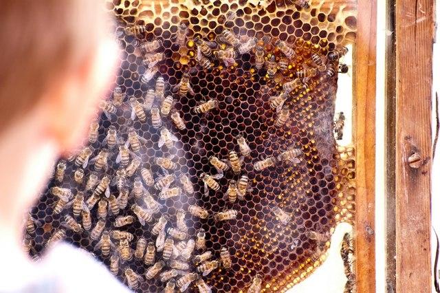 Bee Removal San Diego Bee Removal San Diego