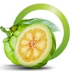 garcinia cambogia - Pure Asian Garcinia UK