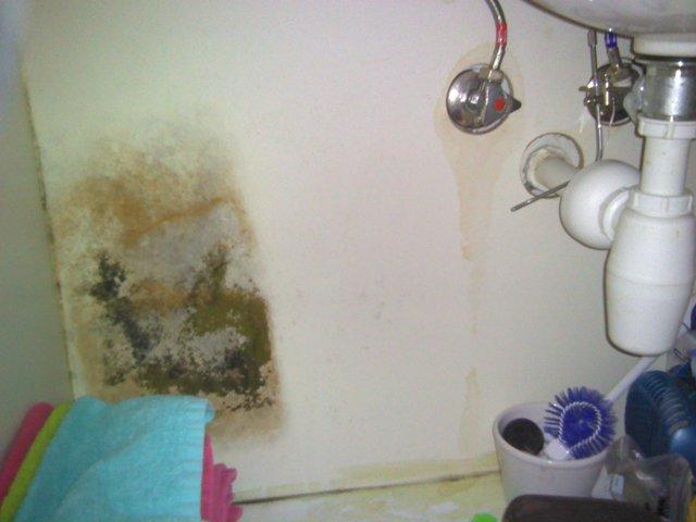wall mold Leak Dtech Dubai