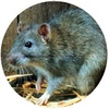 Pest exterminator - Solutions Pest Control