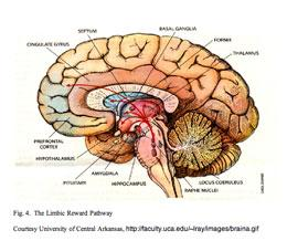 Brain Training And Mind Games Brain Training And Mind Games