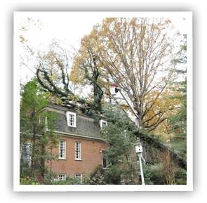 tree removal richmond va Ridgeline Tree Service