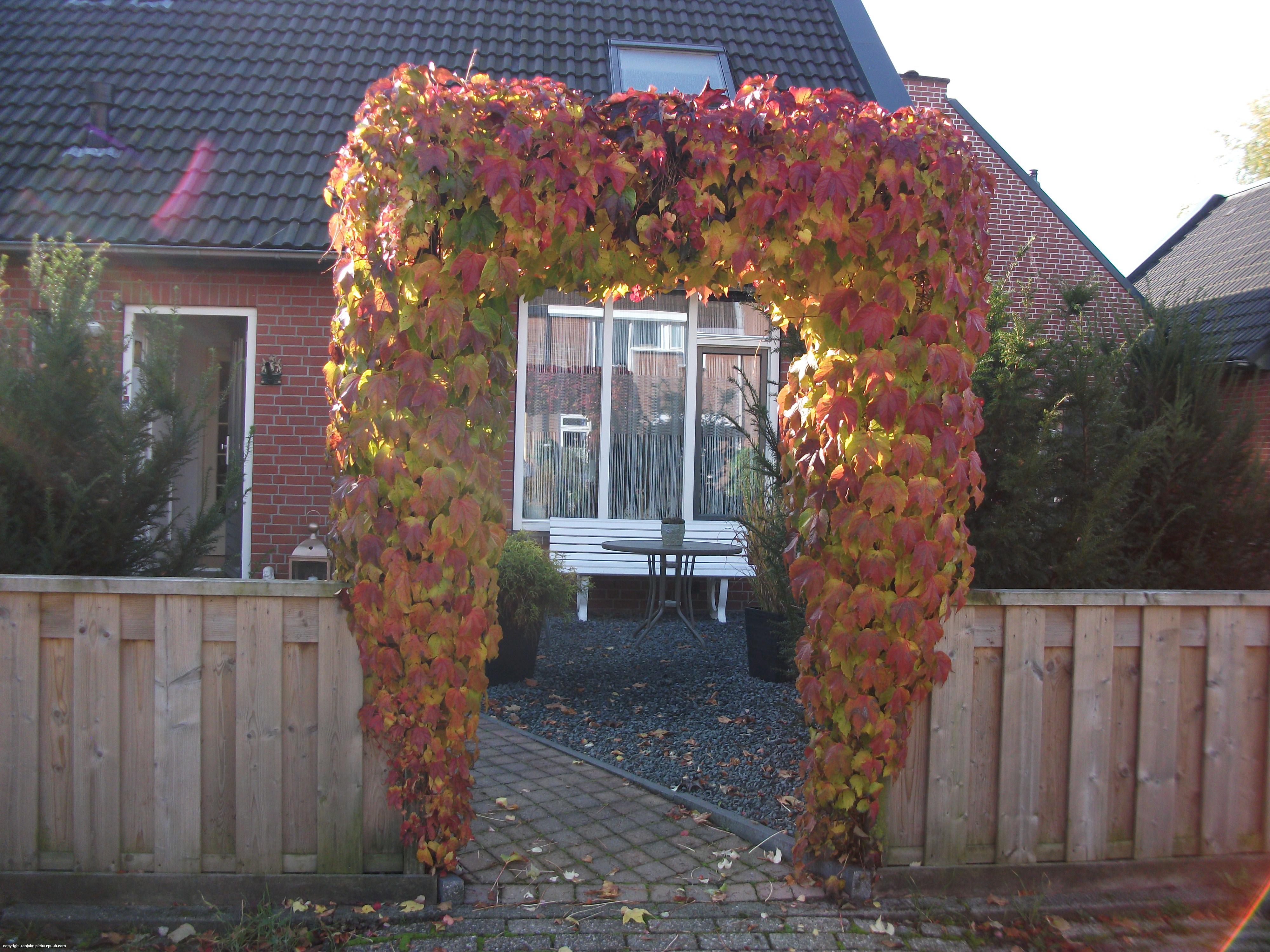 Pergola In Tuin : Tuin pergola in de tuin photo album by ron john